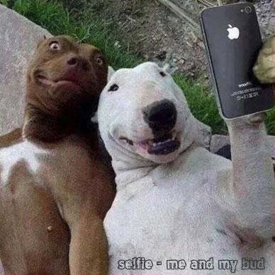 selfie-ultimate